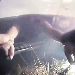 Watch: Police Officer Pulls Woman From Burning Car