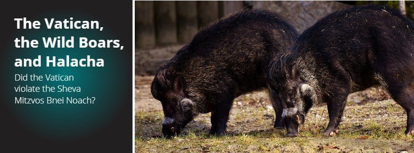 The Vatican, the Wild Boars, and Halacha 1