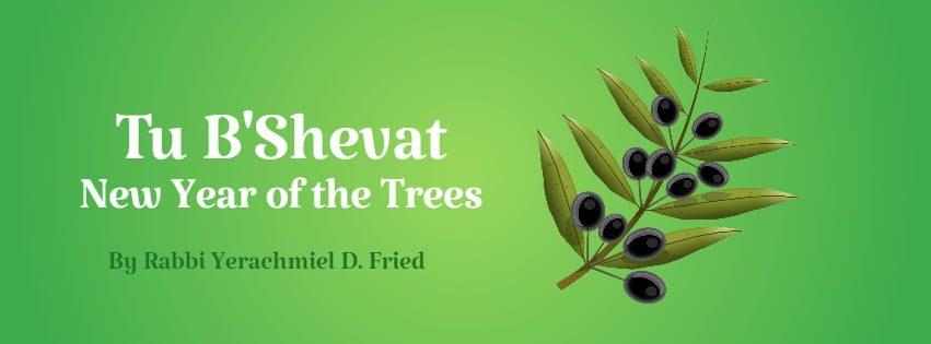 Ask the Rabbi: Tu B'Shevat by Rabbi Yerachmiel D. Fried 1