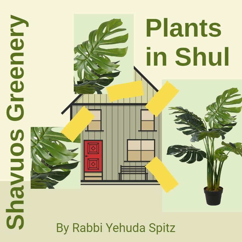 Adorning the Shul with Greenery on Shavuos: Part II 1
