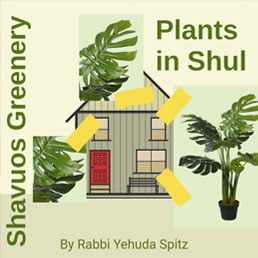 Adorning the Shul with Greenery on Shavuos: Part I