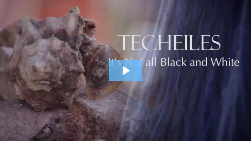 "Listen: The New Techeiles: A Shiur by Rabbi Yisroel Reisman, shlit""a 2"